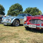 Various Austin Healy vehicles