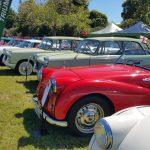 Various Triumph cars